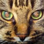 Fotomontaje en los ojos de un tigre
