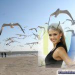 Fotomontaje con aves en el mar