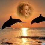 Fotomontaje al atardecer con delfines