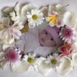Marco de flores para fotos