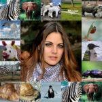 Fotomontaje con animales