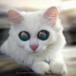 Fotomontaje en los ojos de un gato