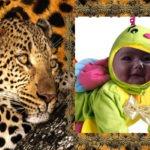 Marco para fotos junto a un tigre