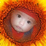 Fotomontaje con un girasol
