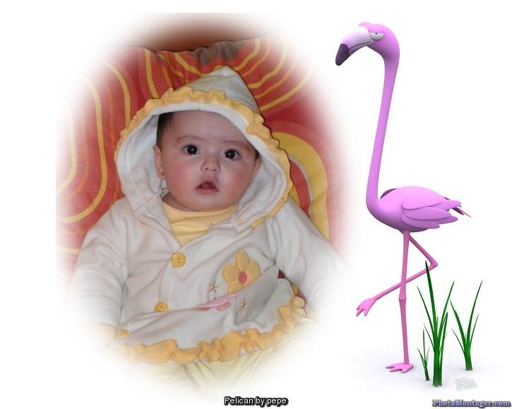 fotomontaje-pelicano