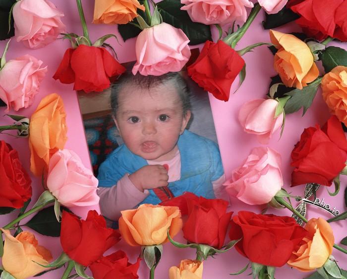 fotomontaje-rosas