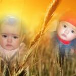 Hacer fotomontaje de espigas con dos fotografías