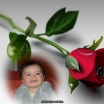 Fotomontaje junto a una hermosa rosa roja