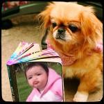 Fotomontaje en el libro de un lindo perrito