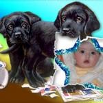 Fotomontaje gratis con dos perritos