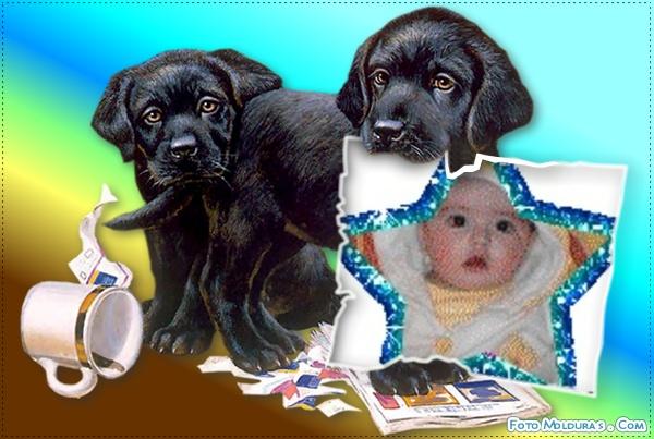 fotomontaje-perritos