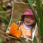 Marco para fotos con una mariposa