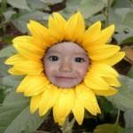 Realizar fotomontajes de rostros en flores