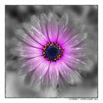 Mejorar tus fotos digitales con edición de fotos