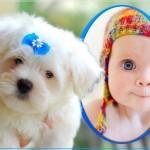 Fotomontajes de perros para tus fotos