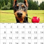 Crear calendarios mensuales con sus fotos
