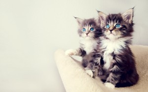 cute_kittens-wide