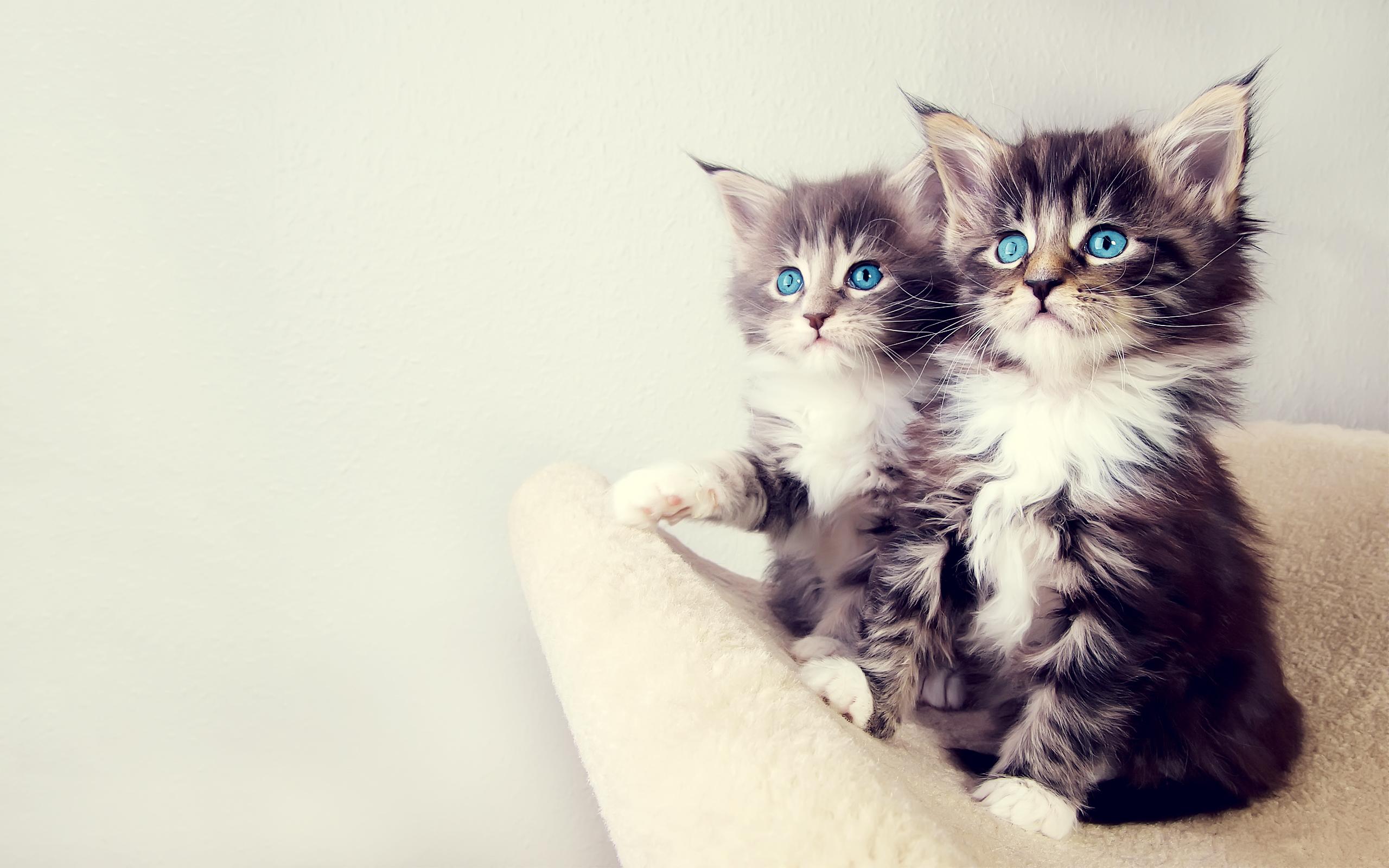 cute_kittens-wide