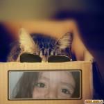 Fotomontaje con un gato con lentes