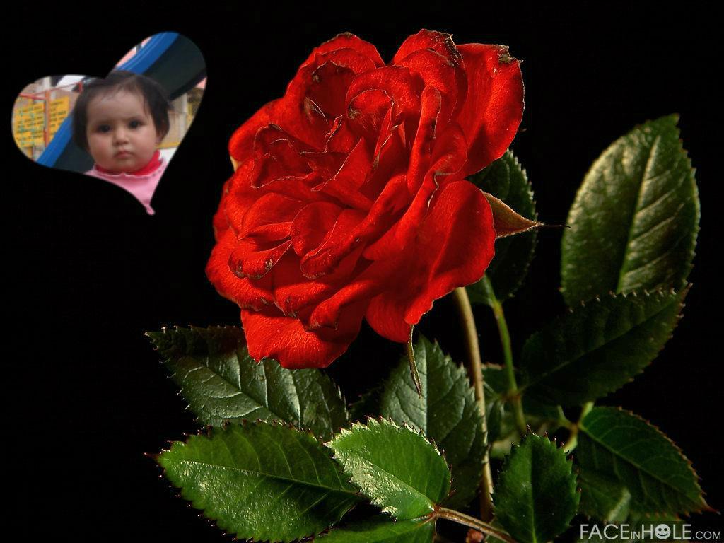 Fotomontaje Con Rosas Por El Día De La Madre Fotomontajes Gratis
