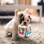Fotomontaje de dos fotos con un tierno perrito