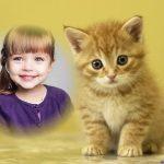 Montaje gratis con mascotas, un lindo gatito junto a ti!